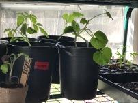 Plantlings